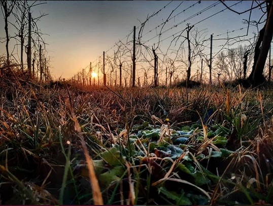 Inverno non inverno azienda agricola ferretti vini